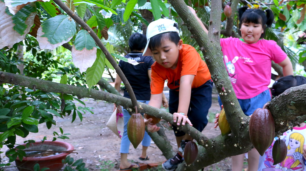 cocoa farm chocolate factory for kids