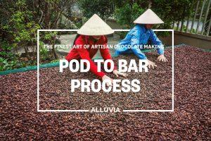 Alluvia cocoa farm and chocolate factory tour