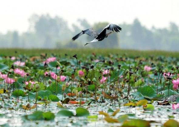 Bird watching Mekong Delta