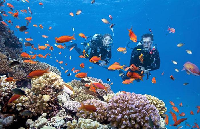 Nhiều hoạt động giải trí dưới biển