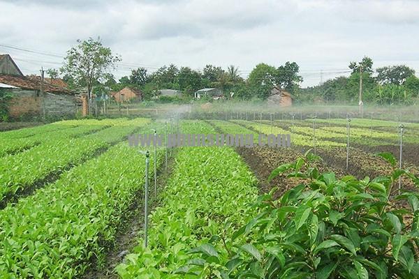 Phun sương Hoàng Hà dùng trong trồng rau ở Thừa Thiên Huế